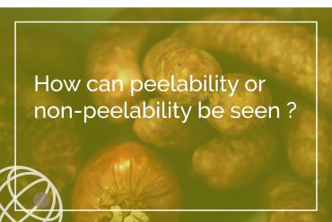 How can peelability or non-peelability be seen ?